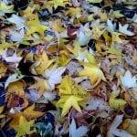 L'autunno ci regala forti emozioni…