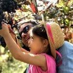 Vendemmia con i bambini Movimento Turismo del Vino Lombardia